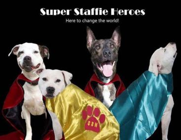 Super Staffie Heroes